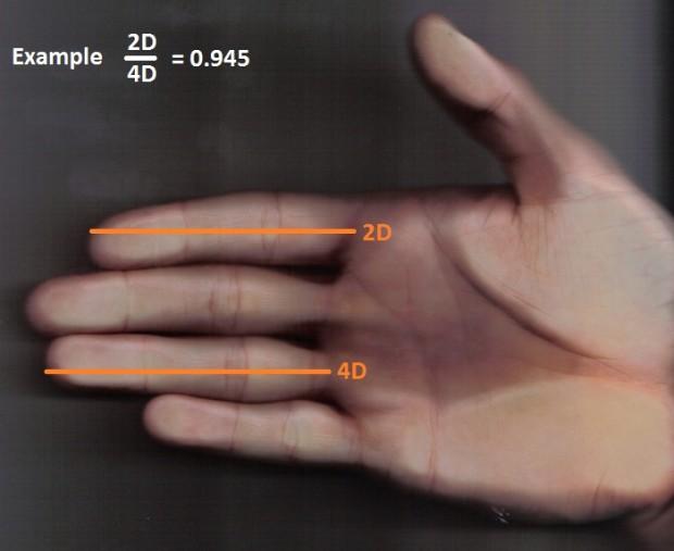 medida del pene a partir de los dedos de la mano estudio