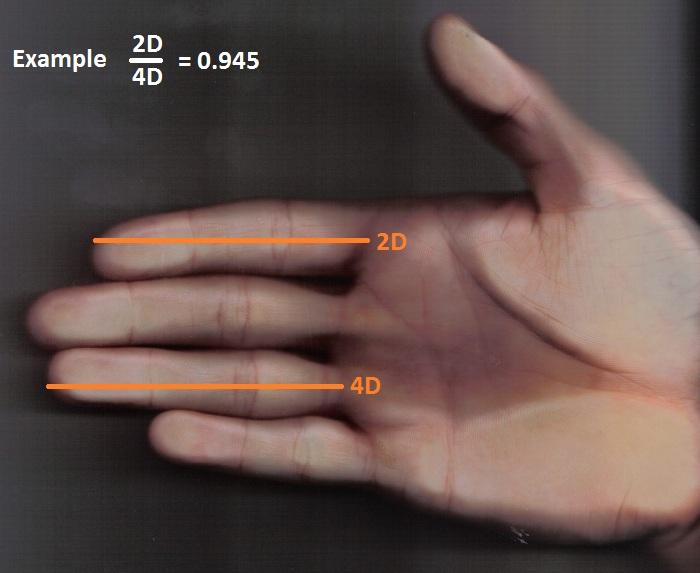 como saber la medida de un pene