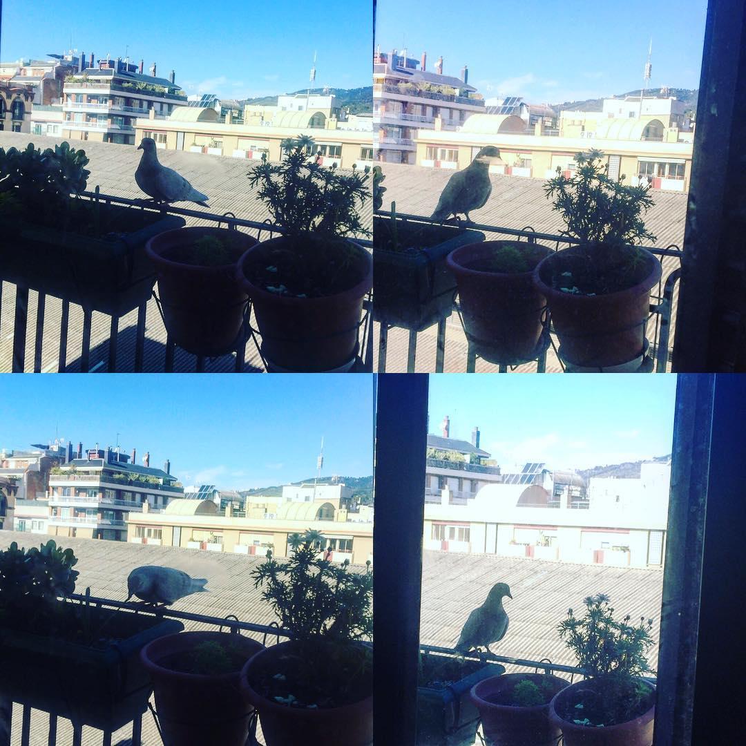 Balcón con paloma