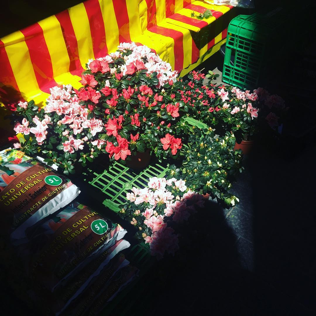No compres flores cortadas, plántalas #floresvivas